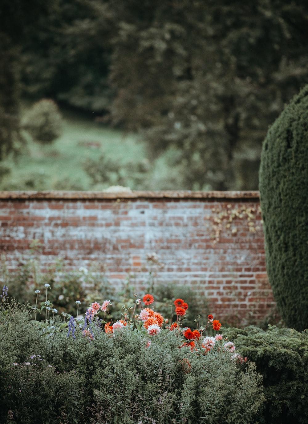 flowers near brown concrete wall