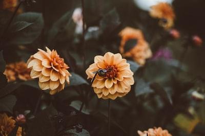 4791. Virágok