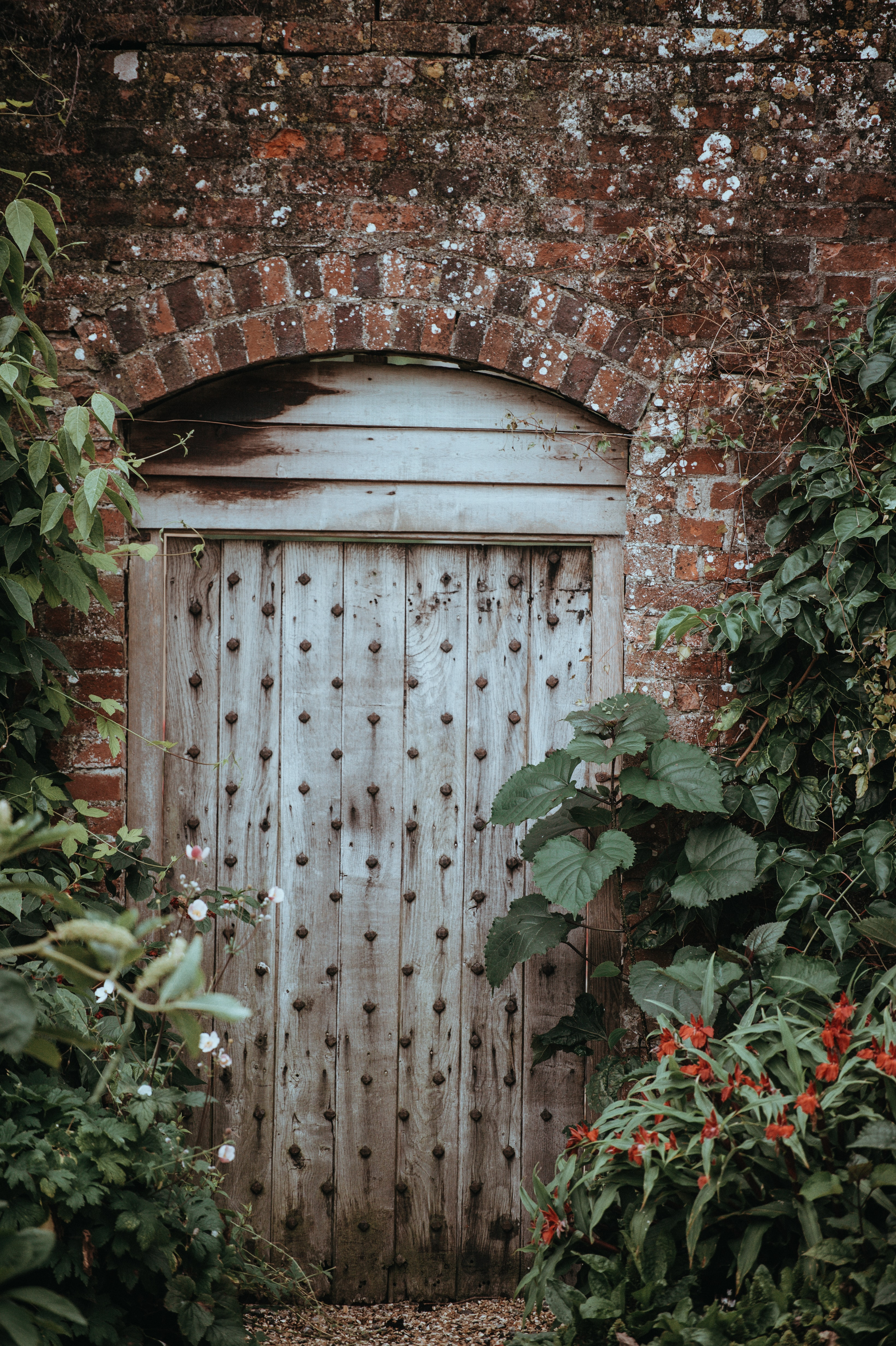 brown wooden door near green leaf plants at daytime