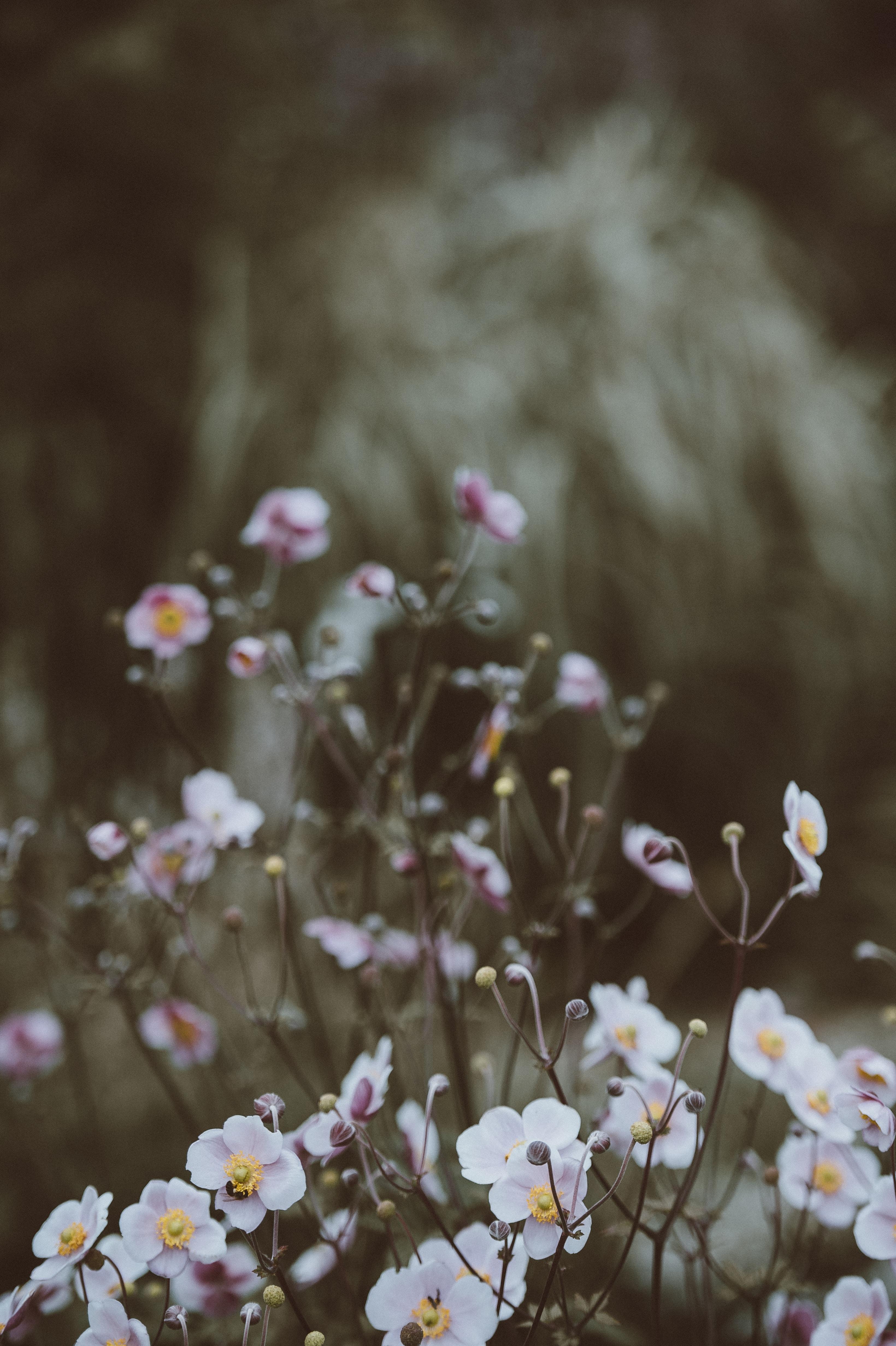 tilt shift photography of white petaled flowers