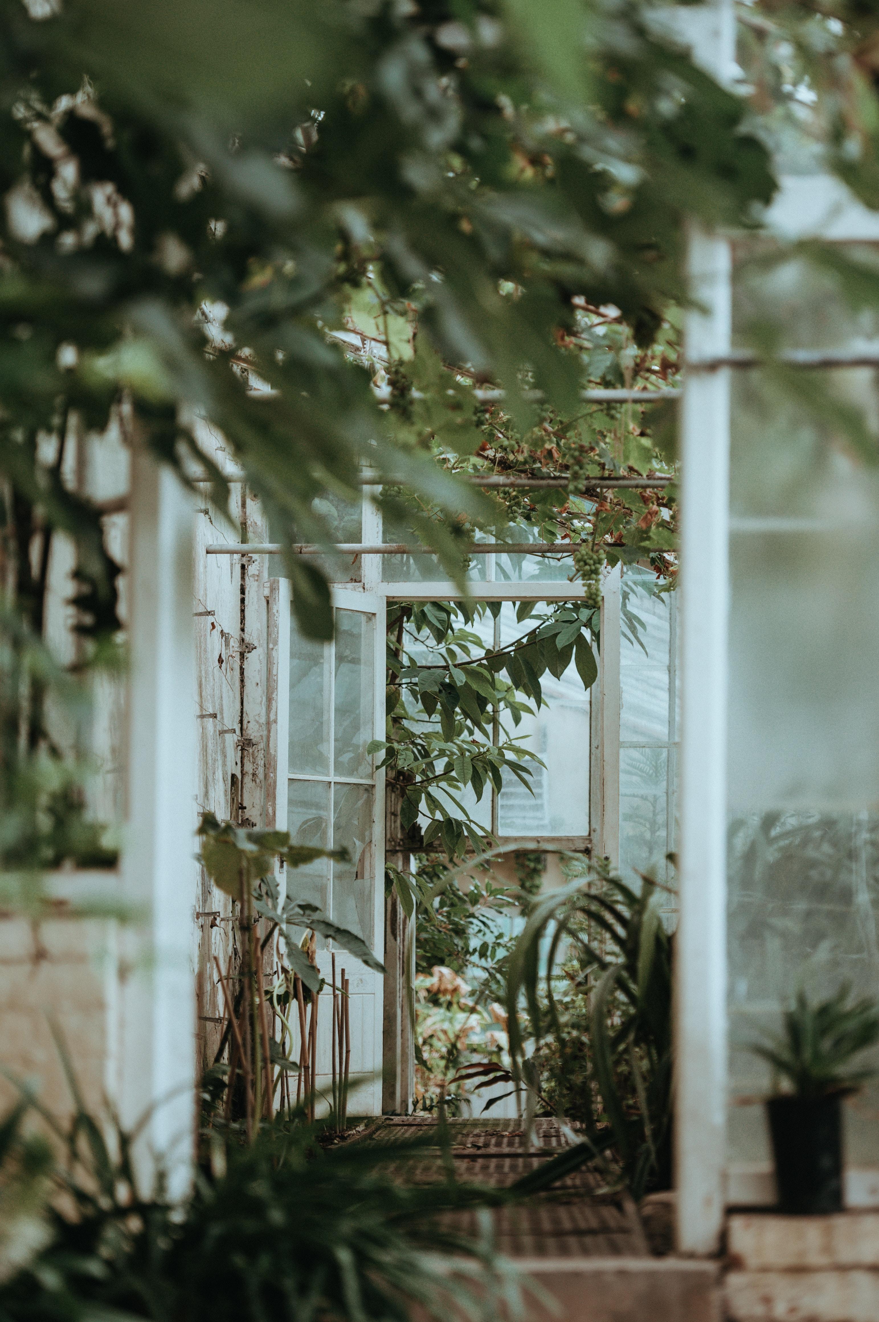 green leafed garden