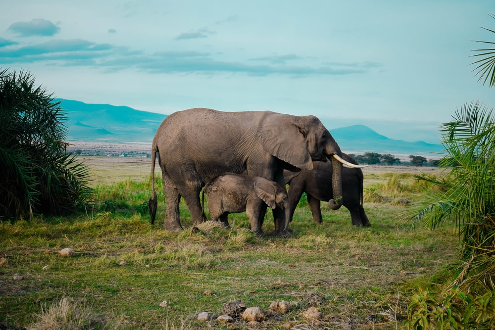 brown elephant family on green grass field
