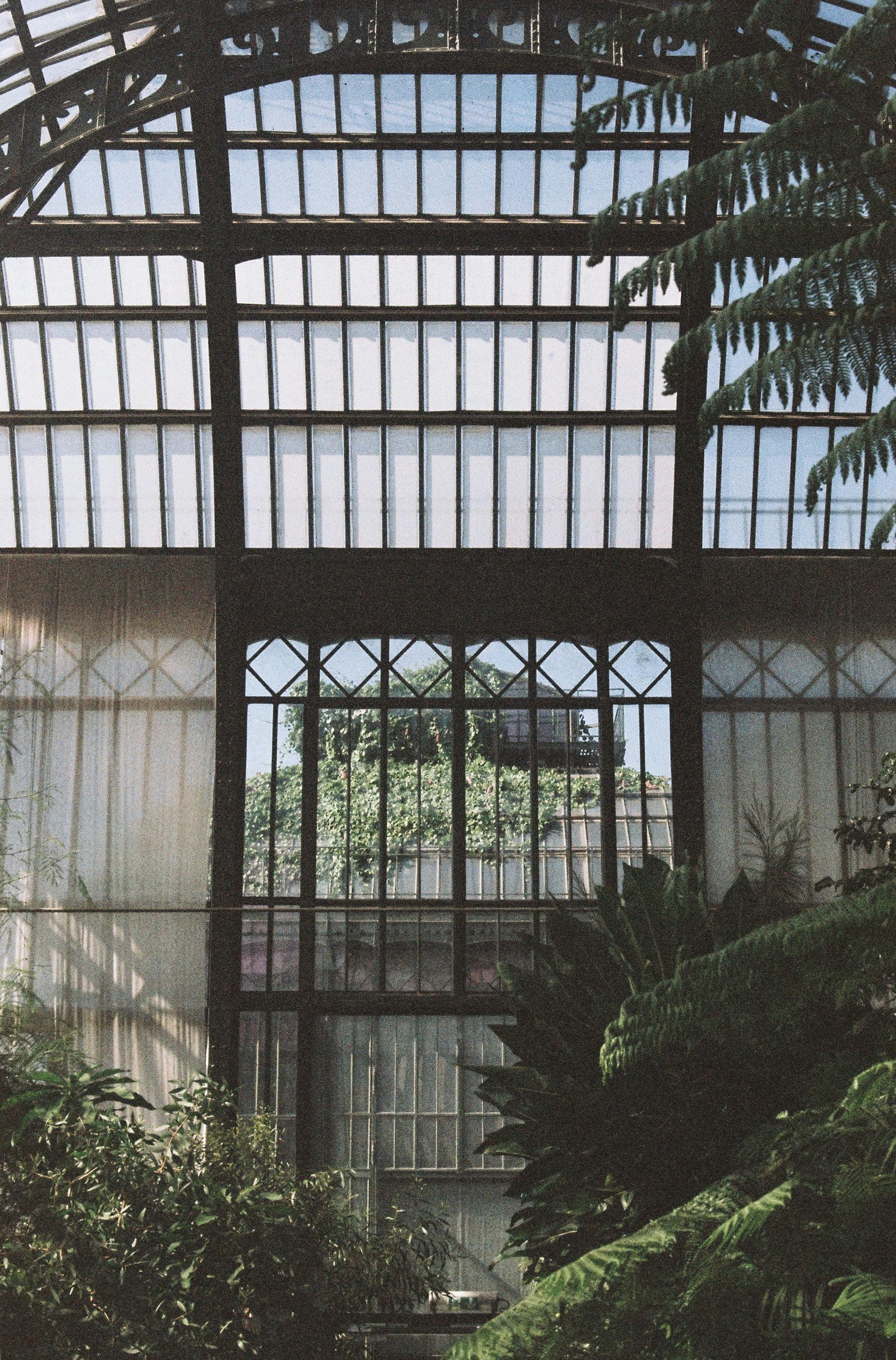 green leaf trees inside white greenhouse