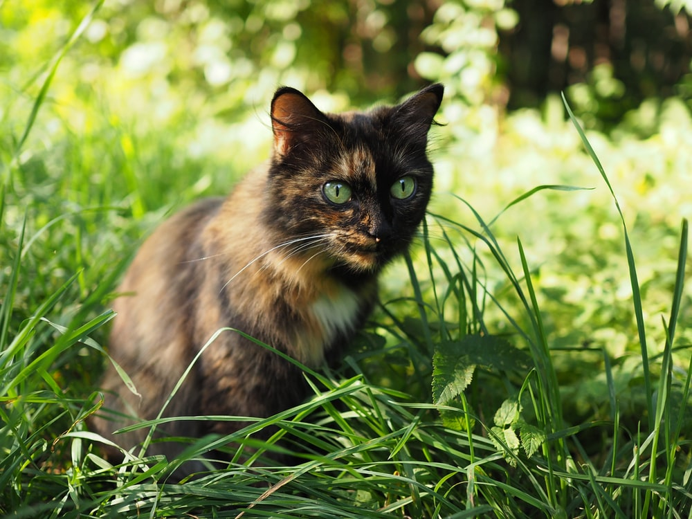 brown and black cat sitting on green grass