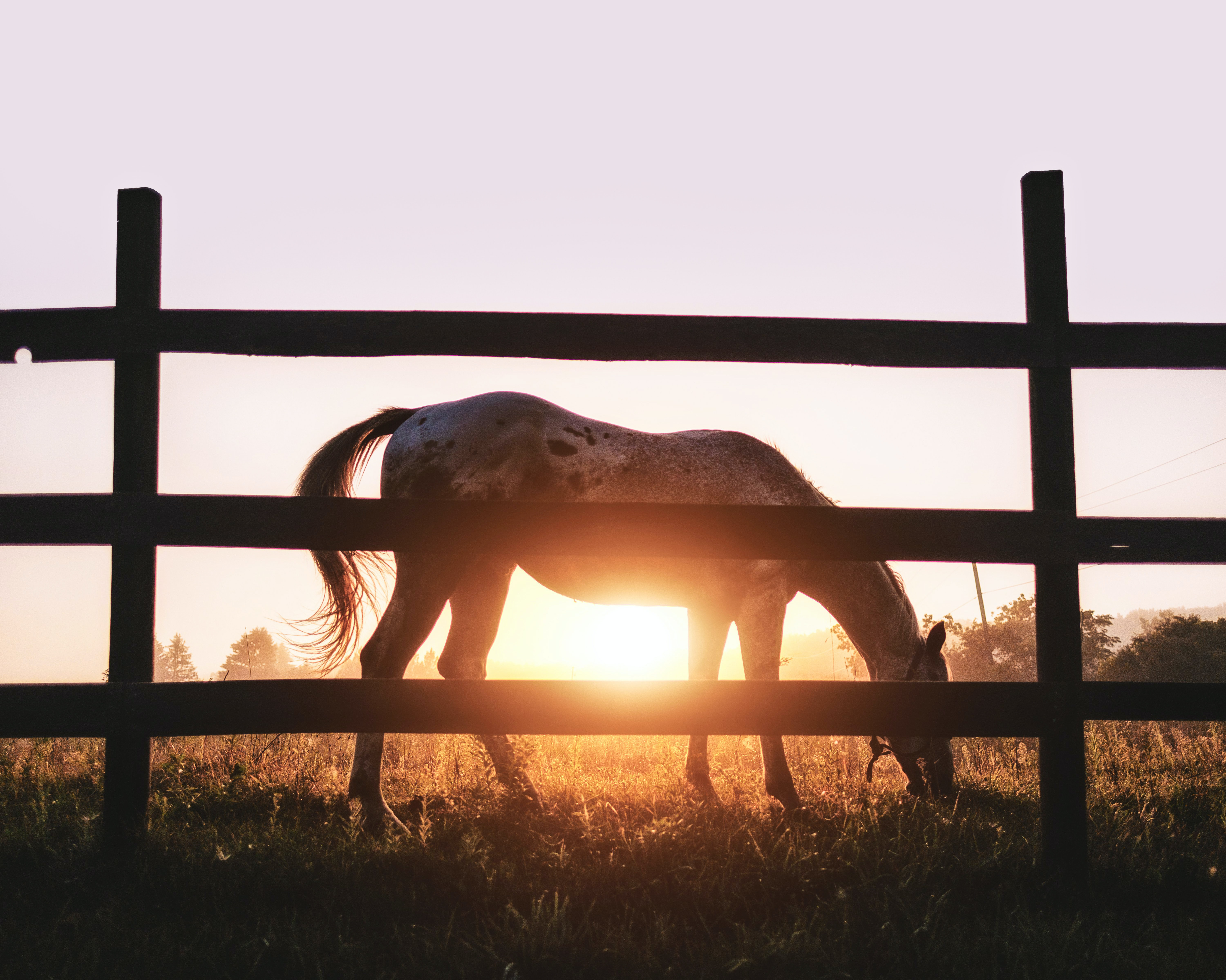 silhouette of brown and gray horse near wooden fence during golden hour