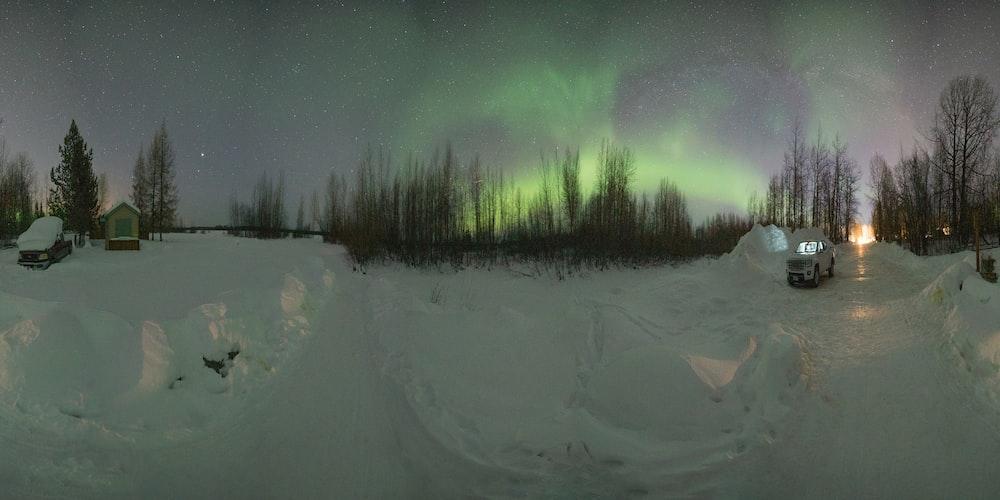 Aurora Borealis over trees