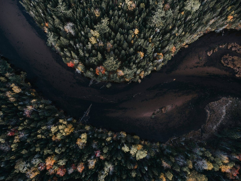 aerial photography of tree and body of water