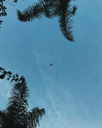 airplane in mid air low angle photography
