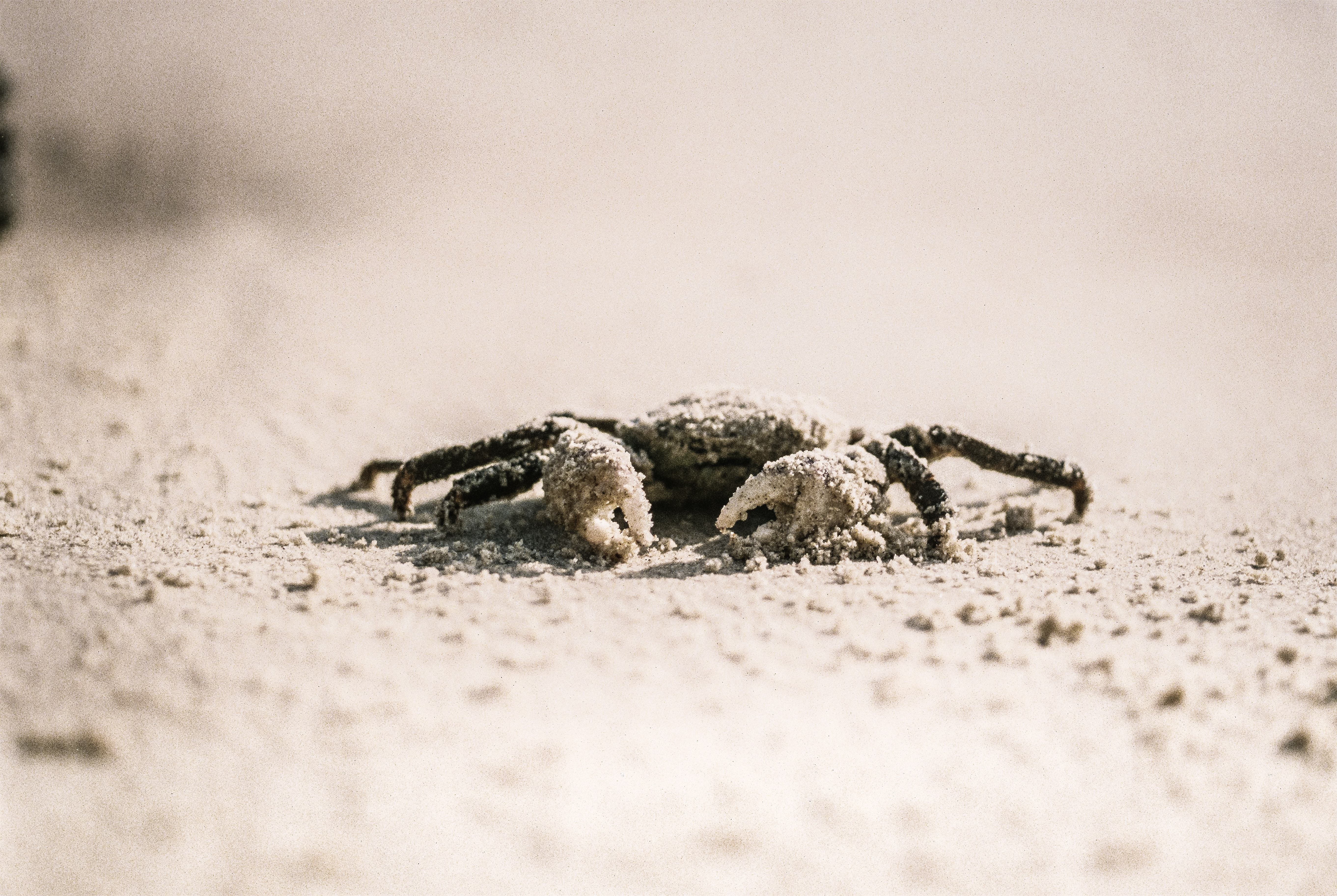 selective focus photography of crab on white sand