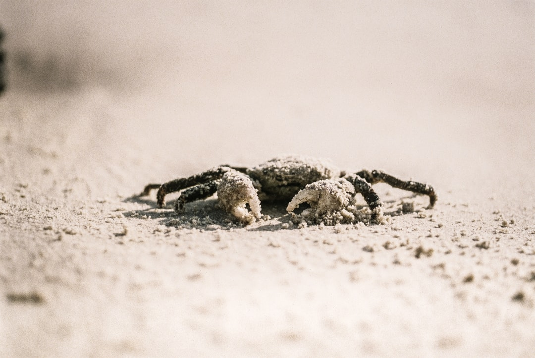 On a beach in Australia a crab, with an evil expression, looks like it's going to go for me if I dare to take the photograph. I risk it and survive.