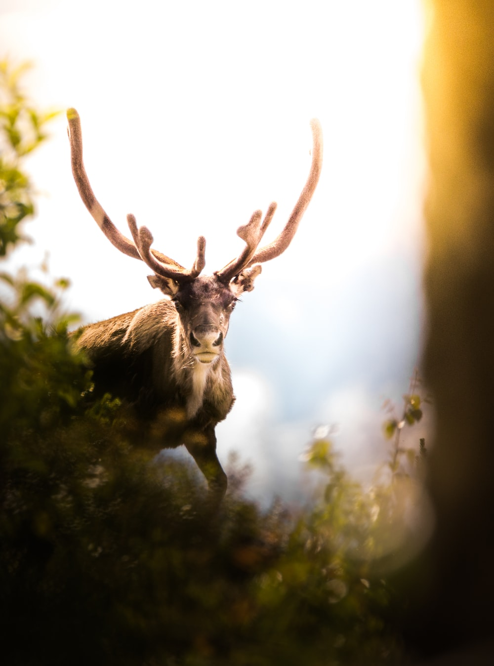 close-up photography of brown moose