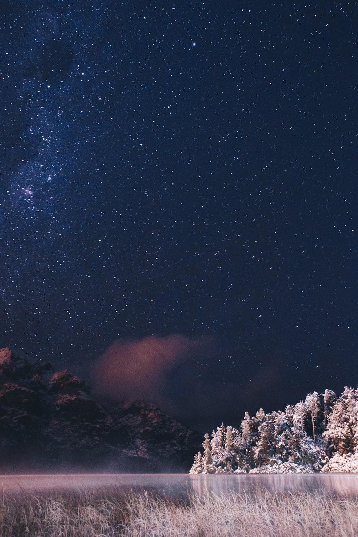 landscape photo of trees near body of water under starry sky