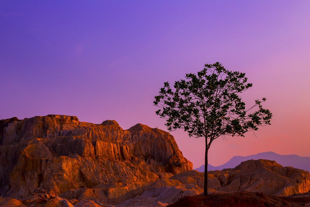 silhouette of tree near rock formations under blue sky at daytime