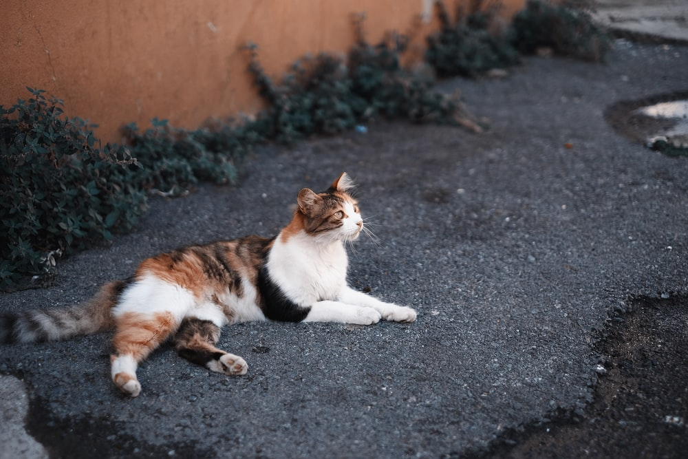 cat laying on ground