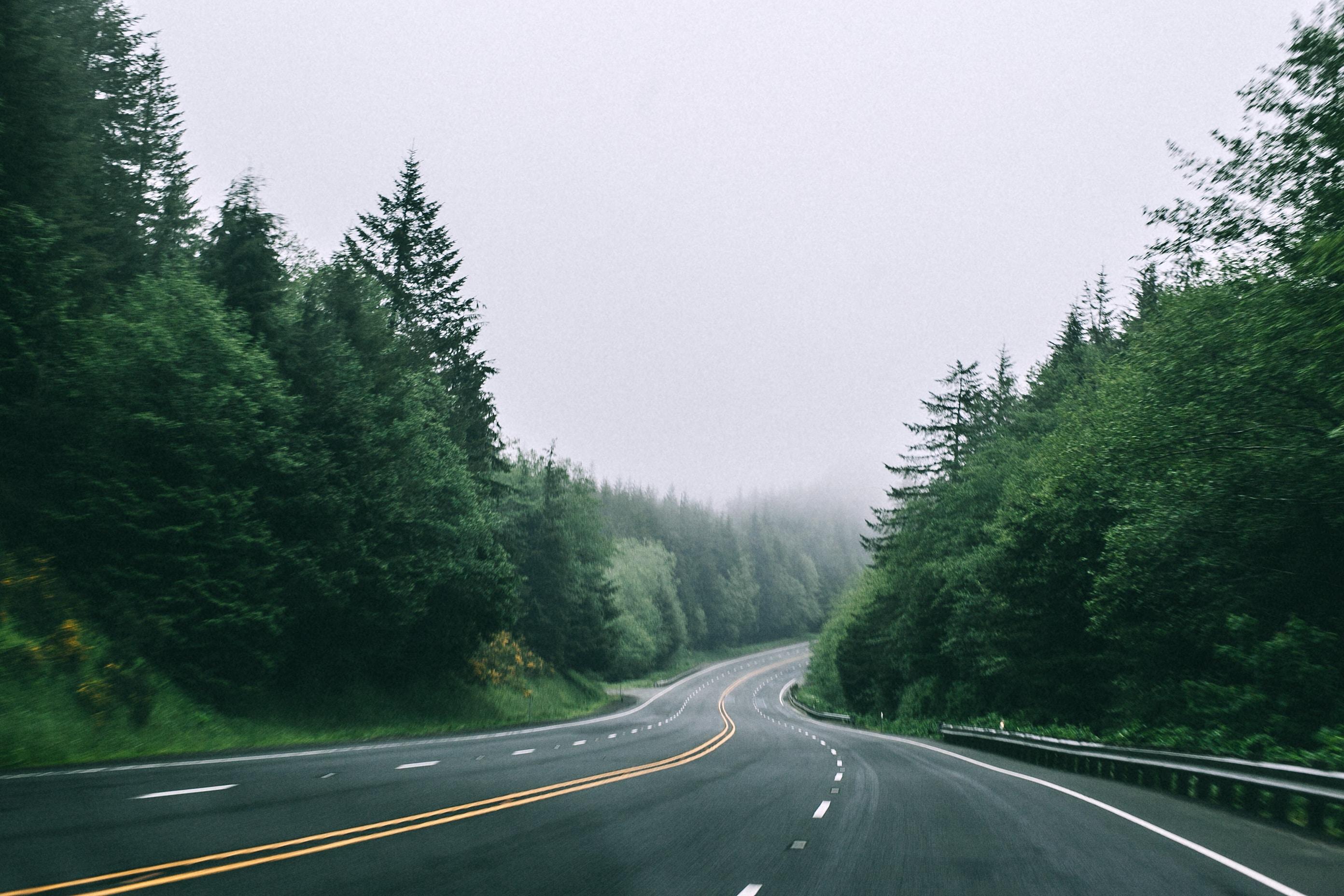 black asphalt road in between trees with foggy weather