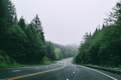 black asphalt road in between trees with foggy weather seaside teams background