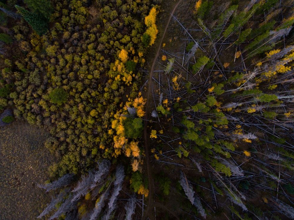 aerial view photography of yellow and red petaled flower
