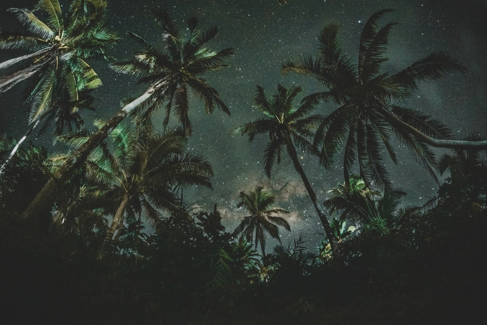 low angle photography of a coconut trees with stars as background
