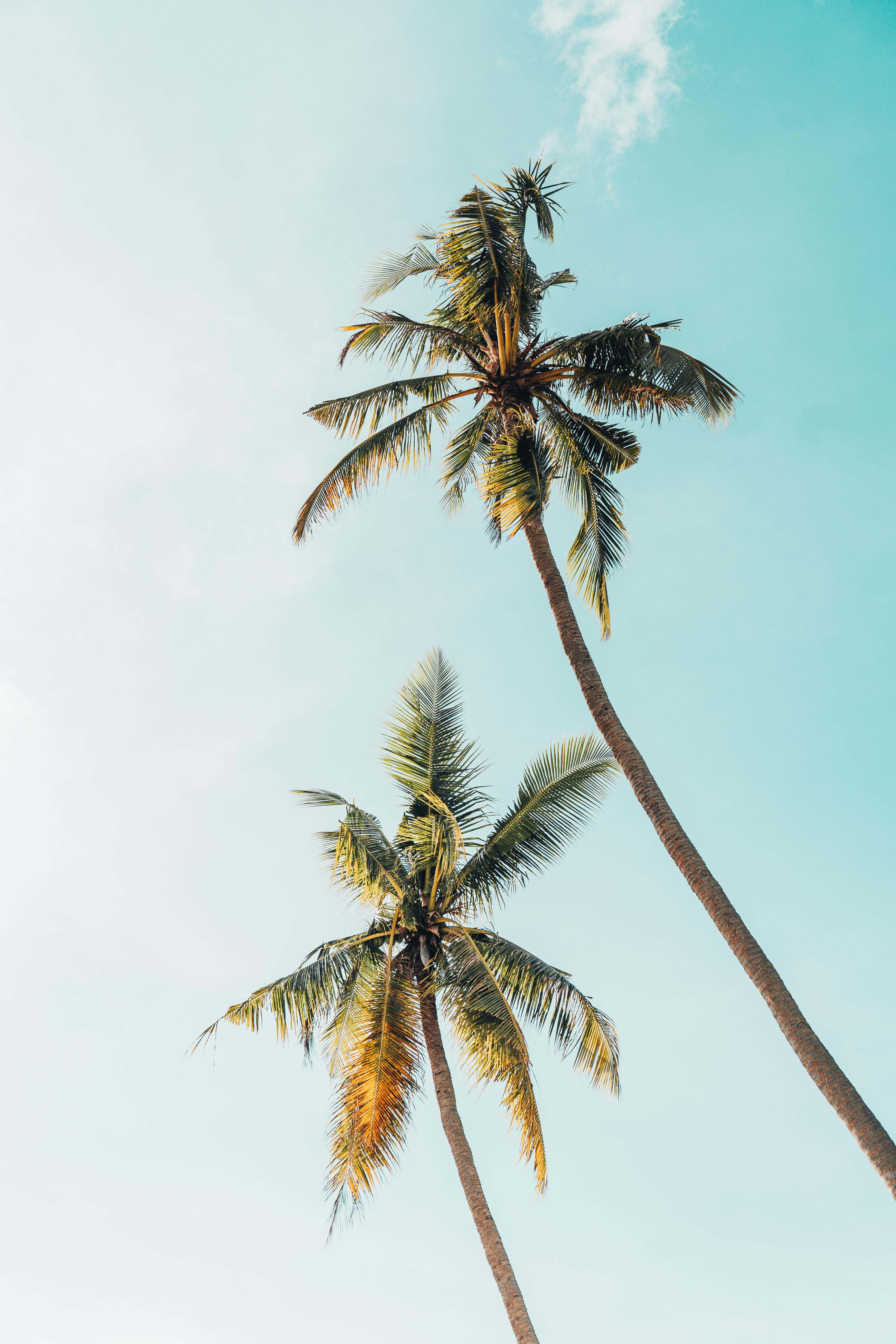 worm's-eye view photography of two coconut trees