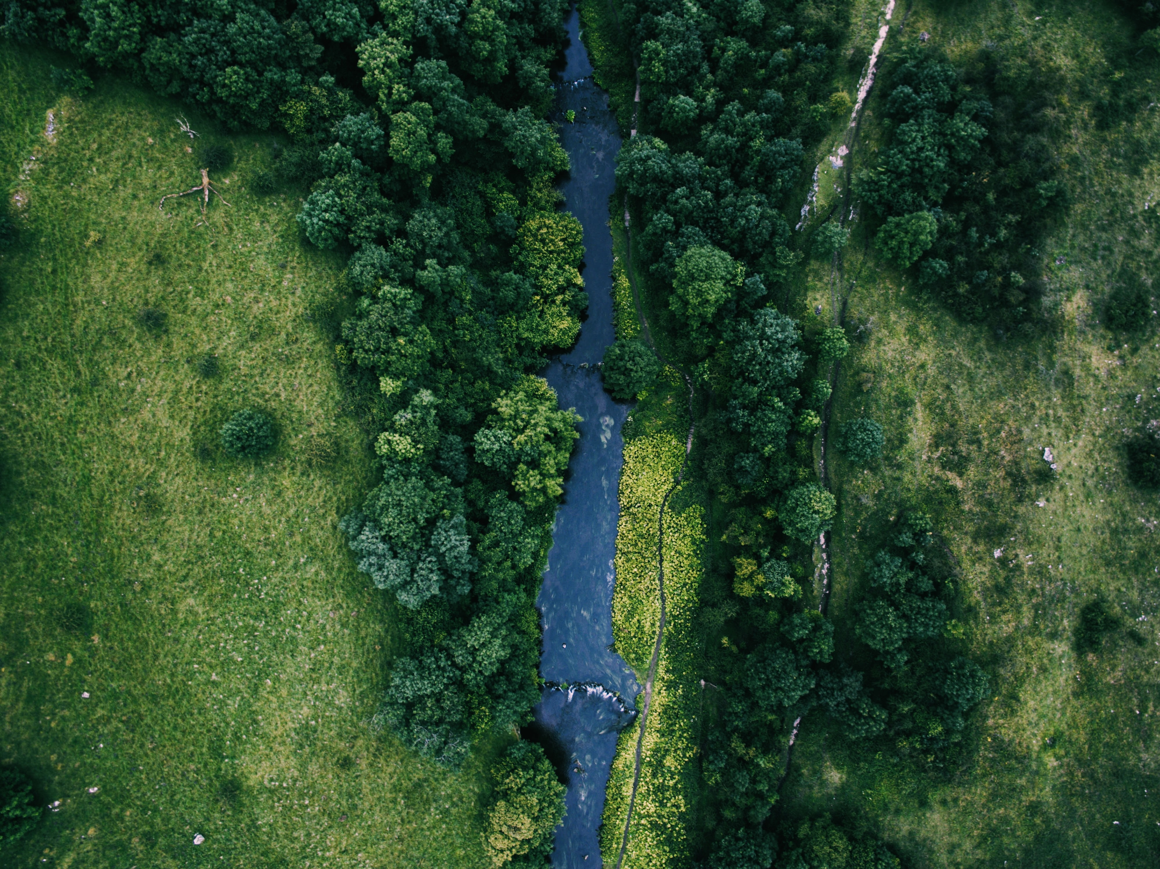 bird's eye photography of river between trees and green grass