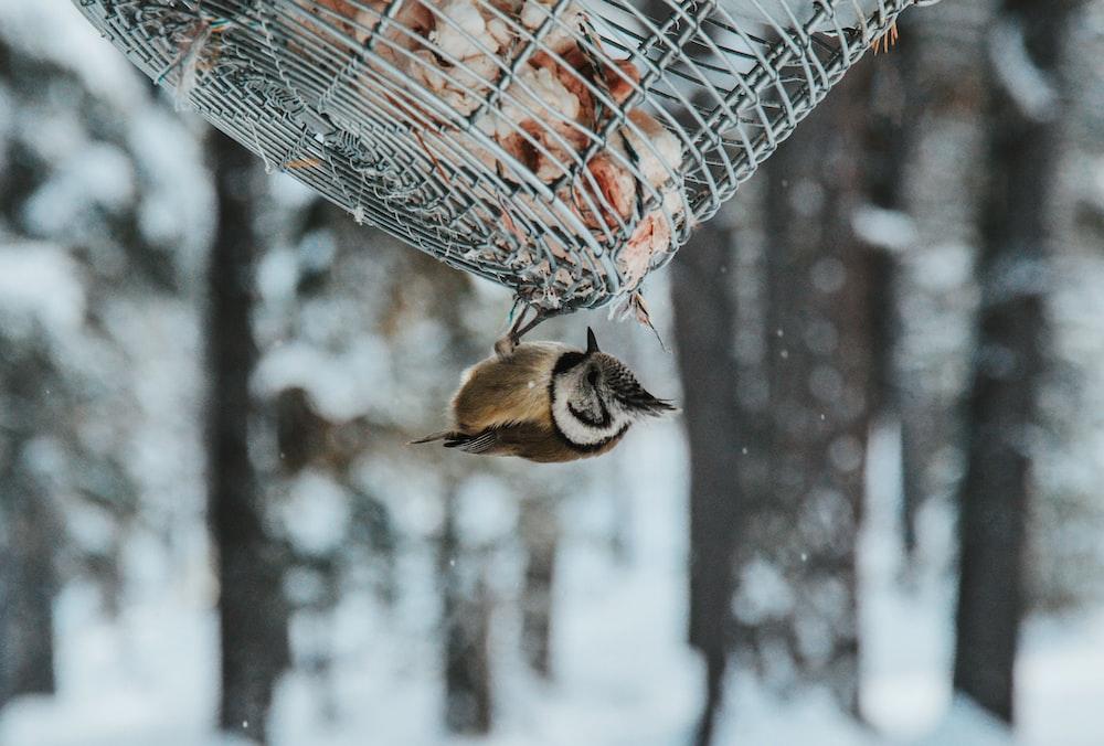 brown bird hanging on grey metal screen