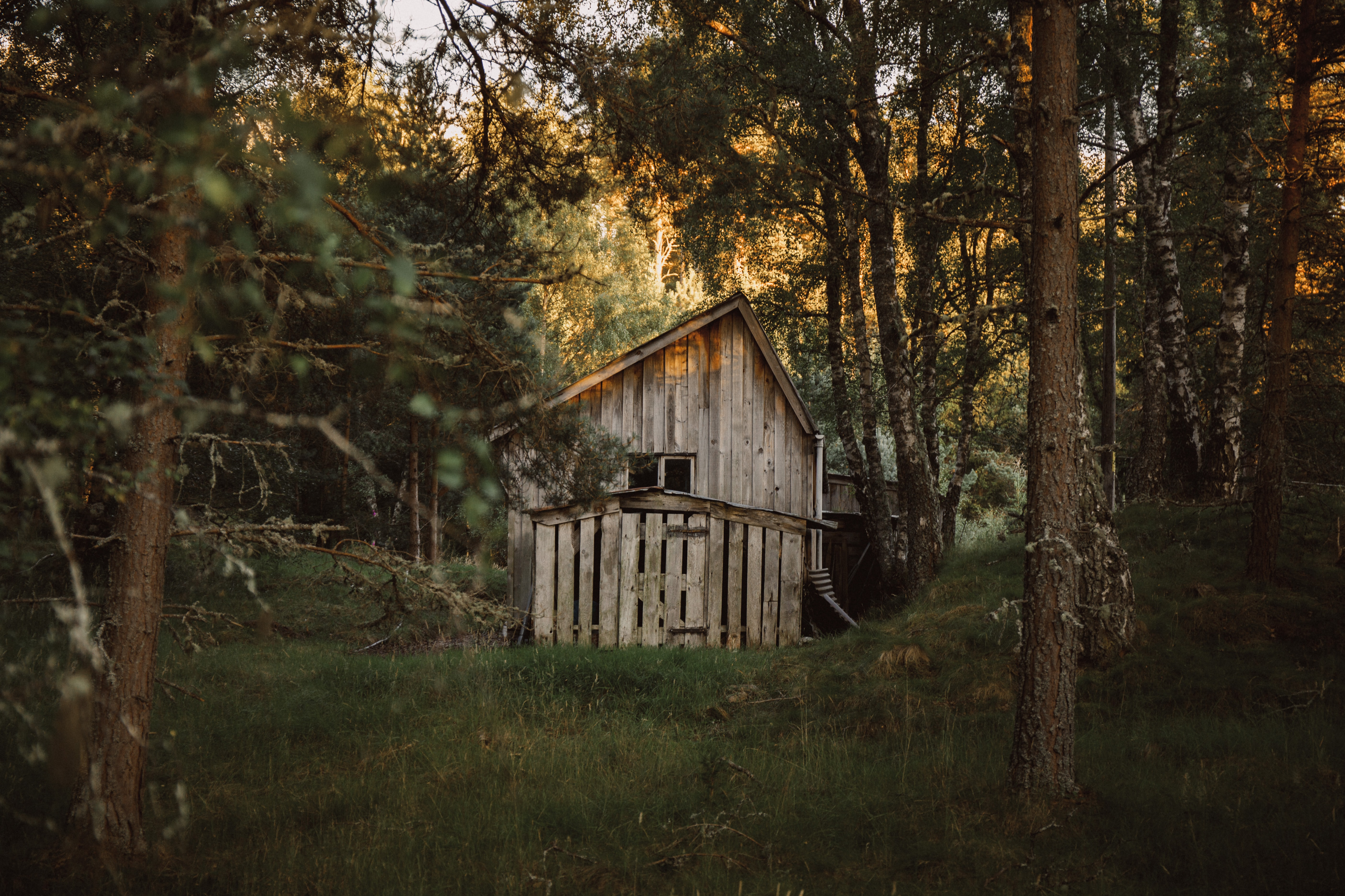 white wooden shed surrounded by trees