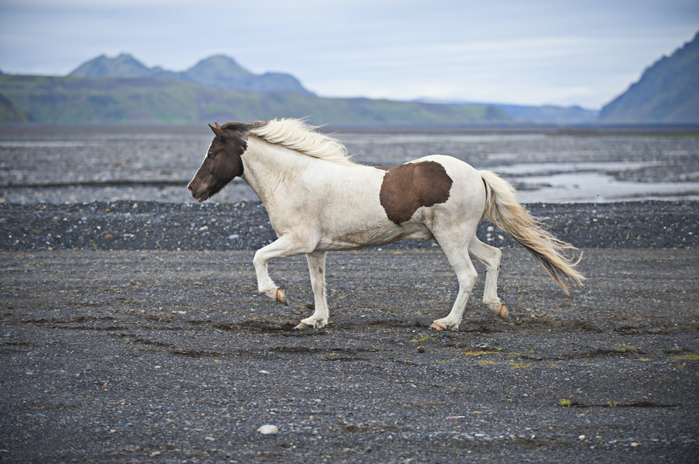 white and brown horse on land during daytime