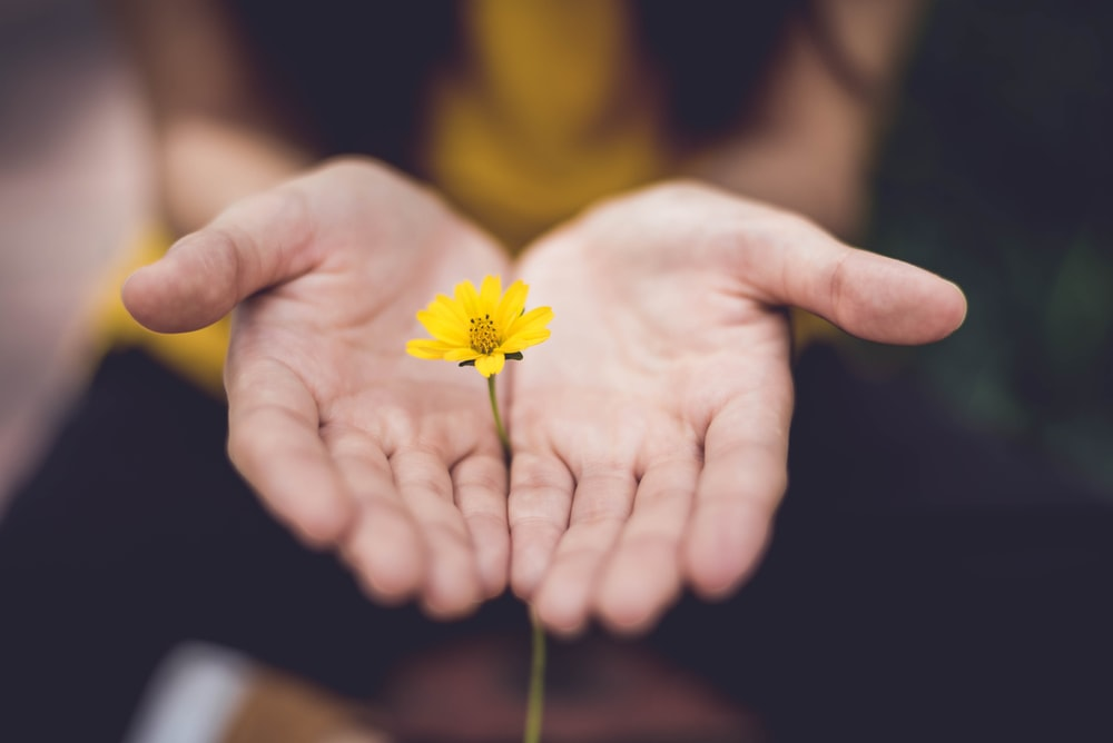 selective focus photography of woman holding yellow petaled flowers