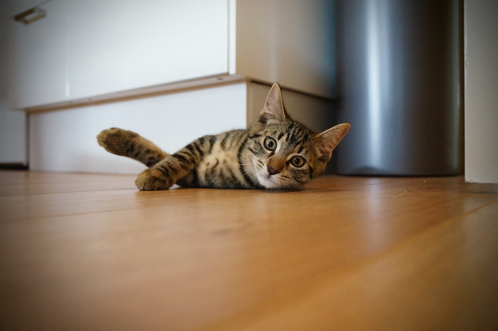 brown tabby cat lying near white wooden furniture