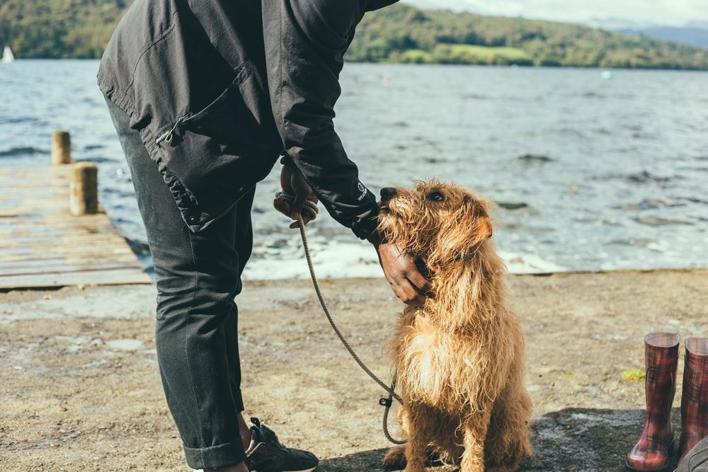 man and dog standing near dock