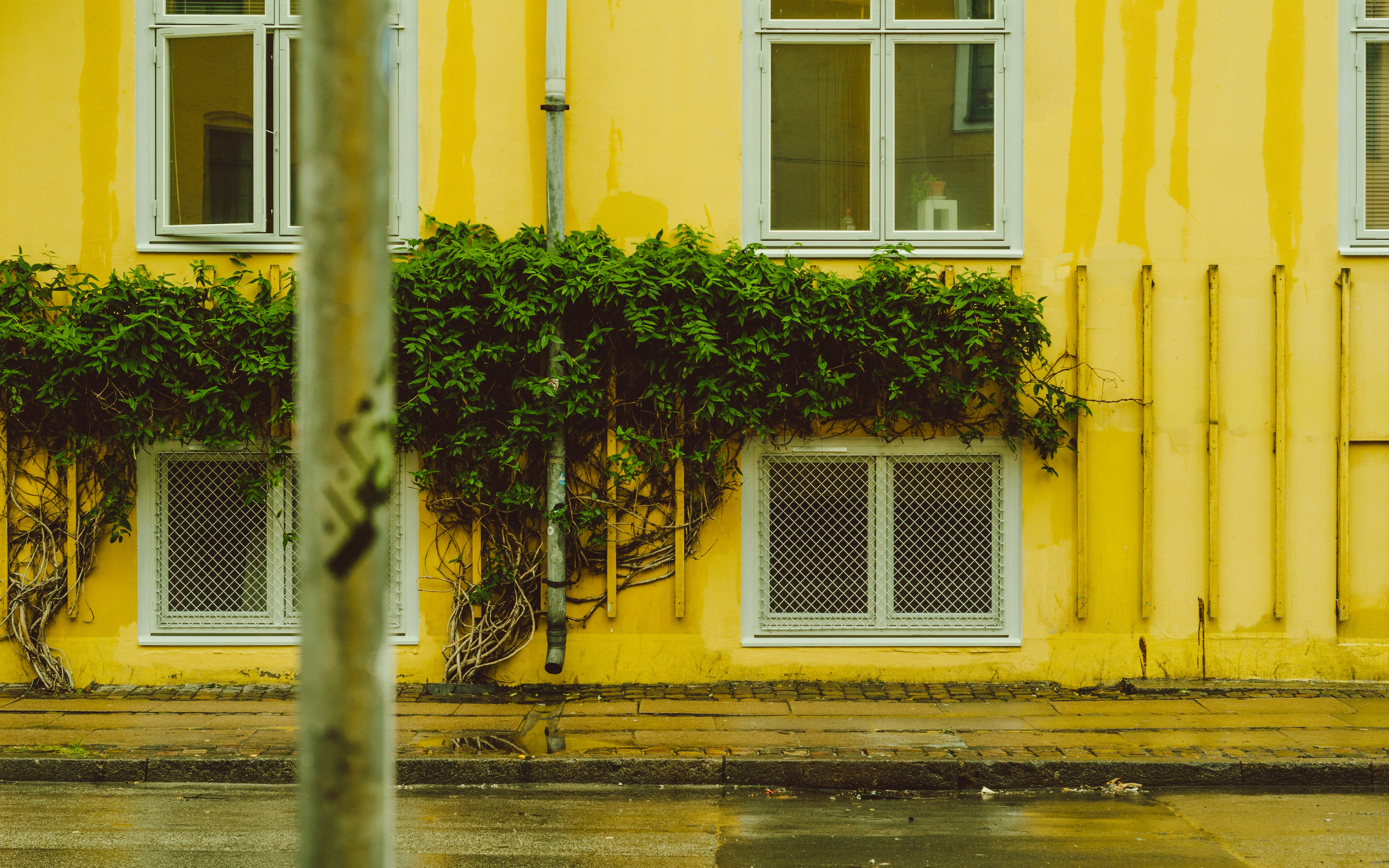 green leafed plants on yellow house photo