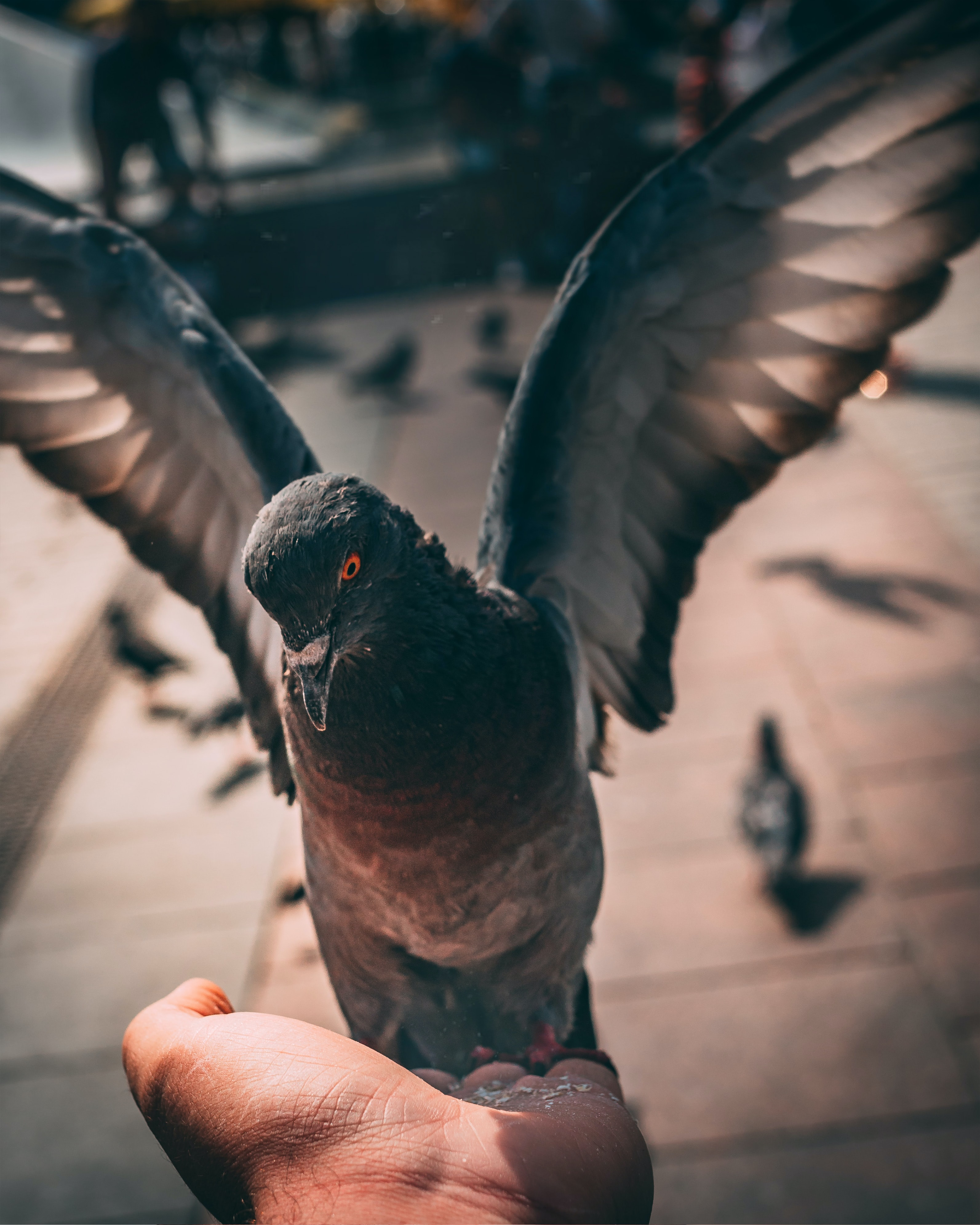 person holding grey and black pigeon at daytime