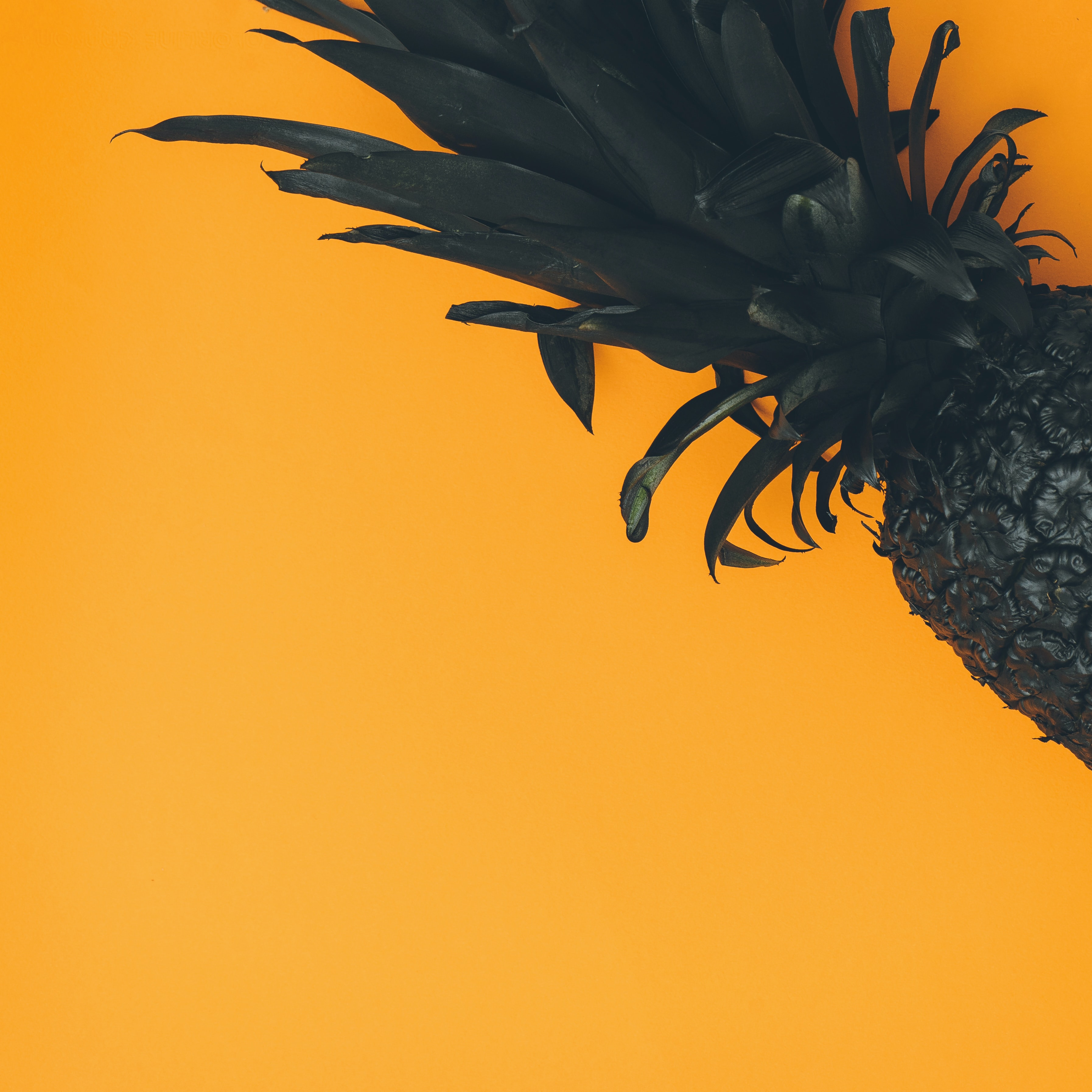 pineapple on orange background