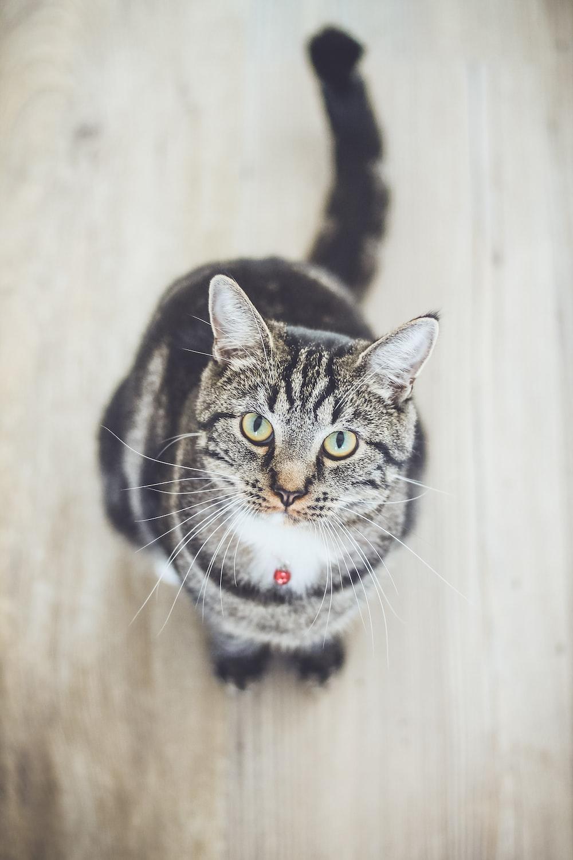 20 cat pictures images download free photos on unsplash voltagebd Images