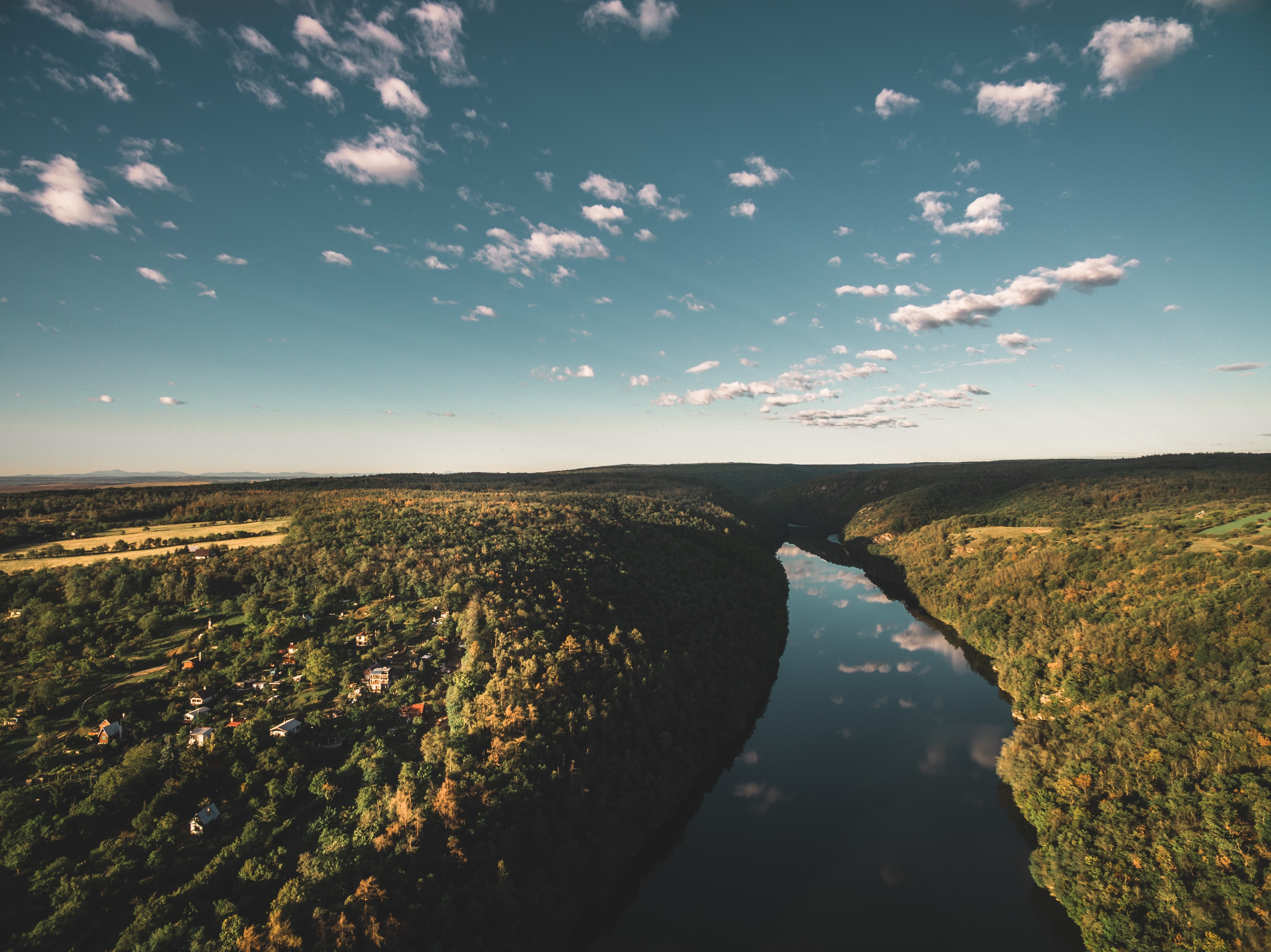 aerial photography of river near forest