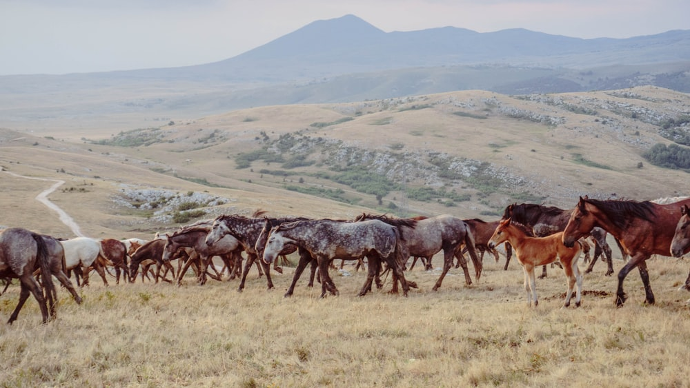 herd of horse traveling on grass hill during day