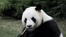 Una Panda 4x4 con Leasing