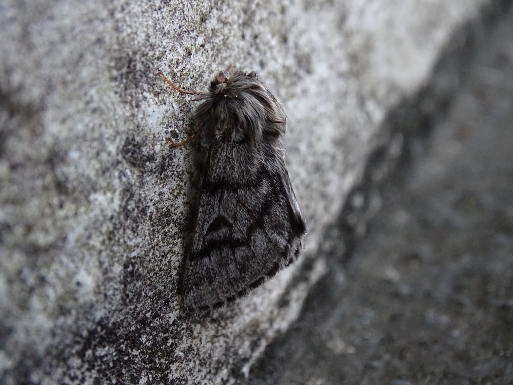 moth on gray surface