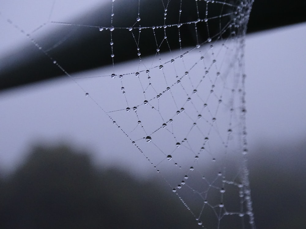 grayscale photo of dew on spider web