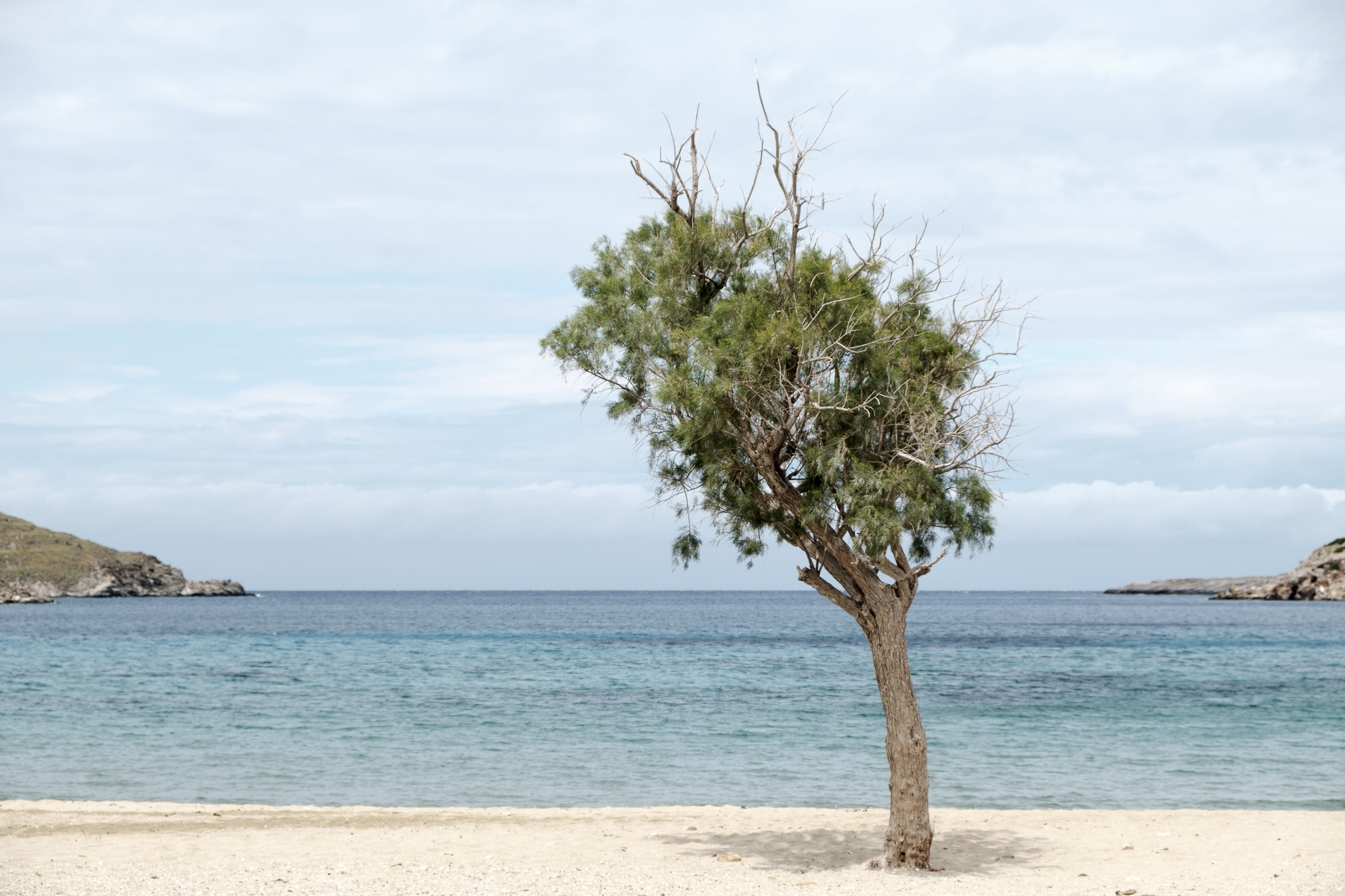 brown tree on seashore during daytime