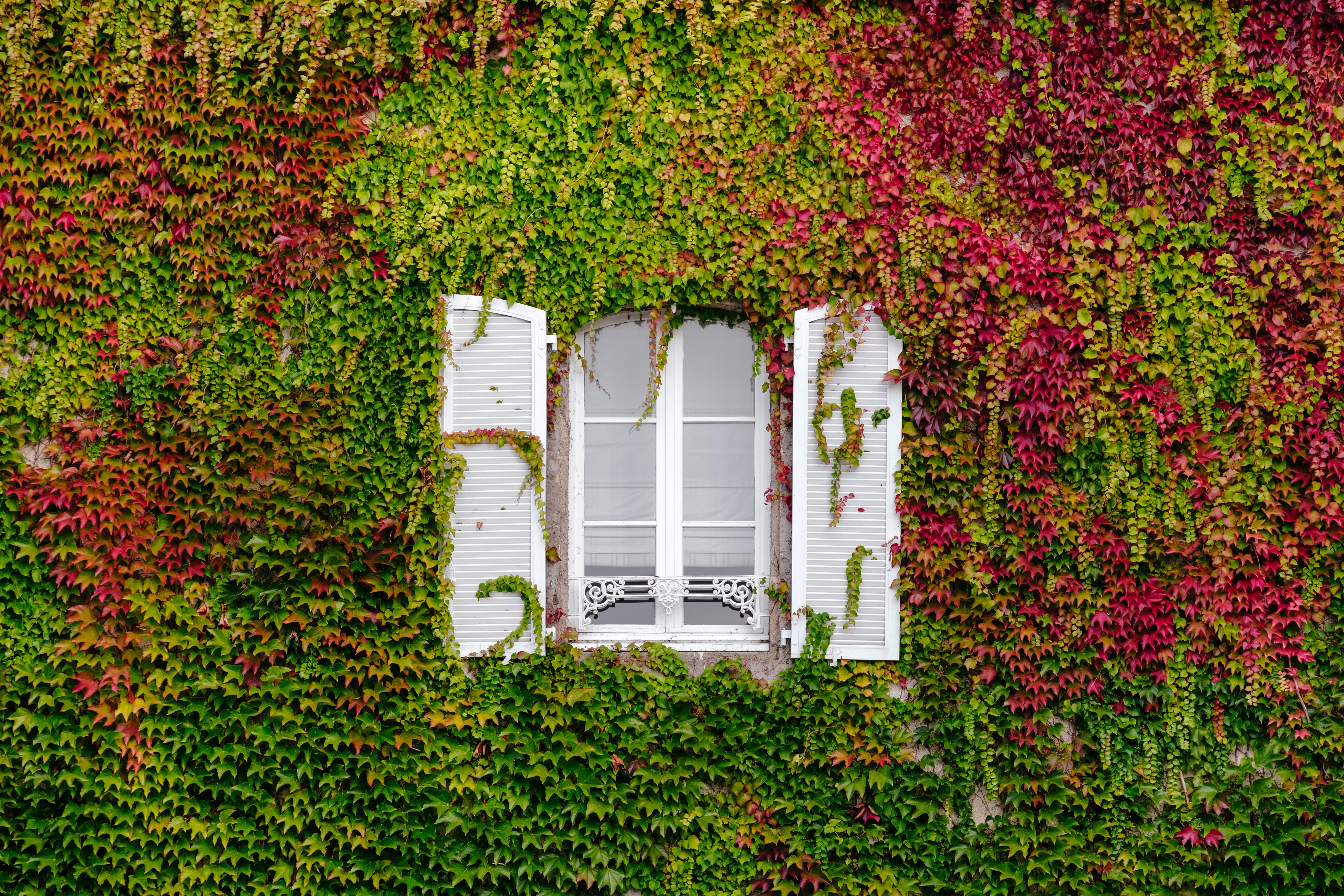 clear glass window with grown green and pink vines