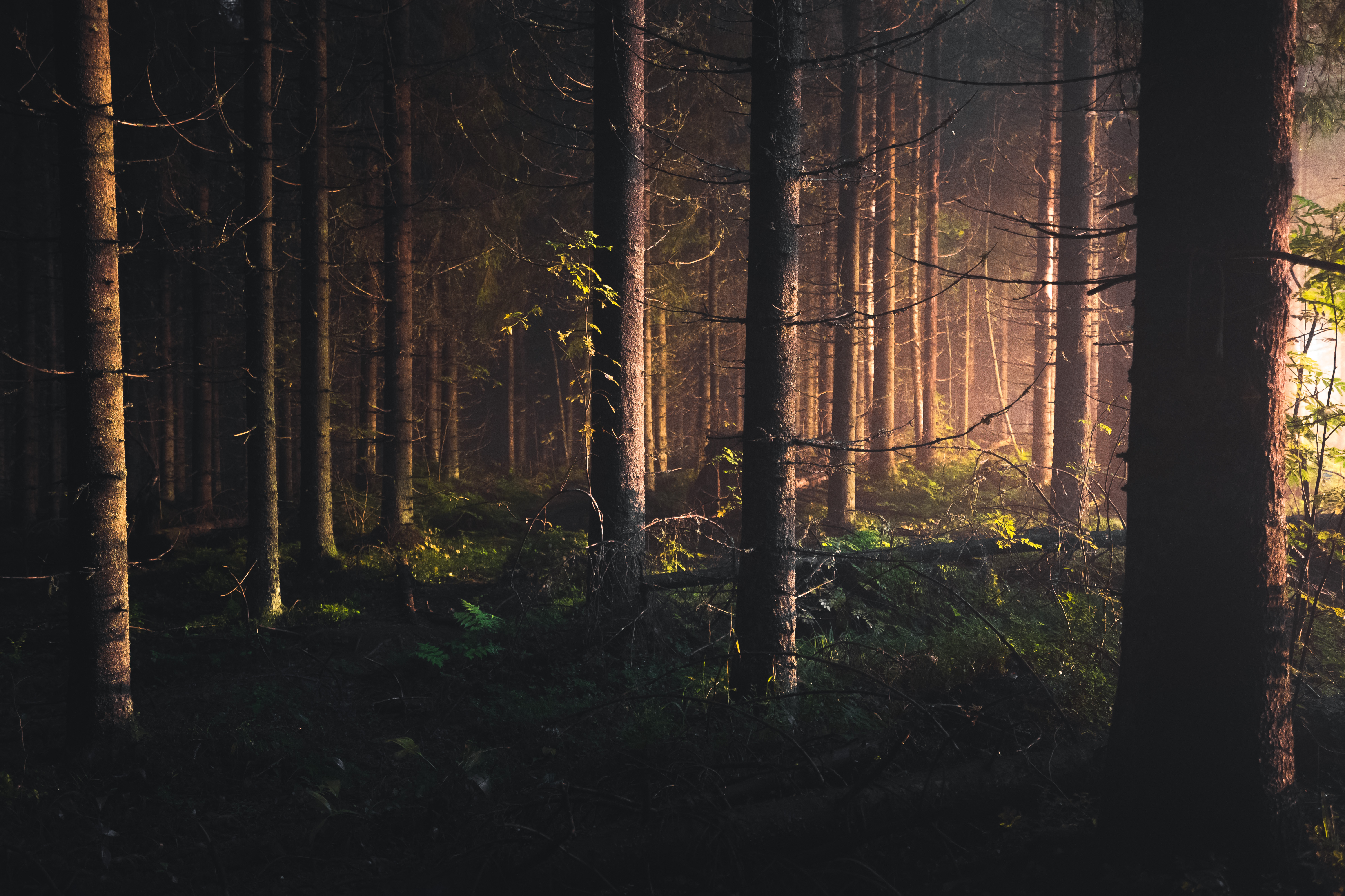 I took this image at midnight in a pitch black forest. The light coming from street lights illuminated the trees through the mist and created a dreamy scene. Find me on Instagram @niiloi