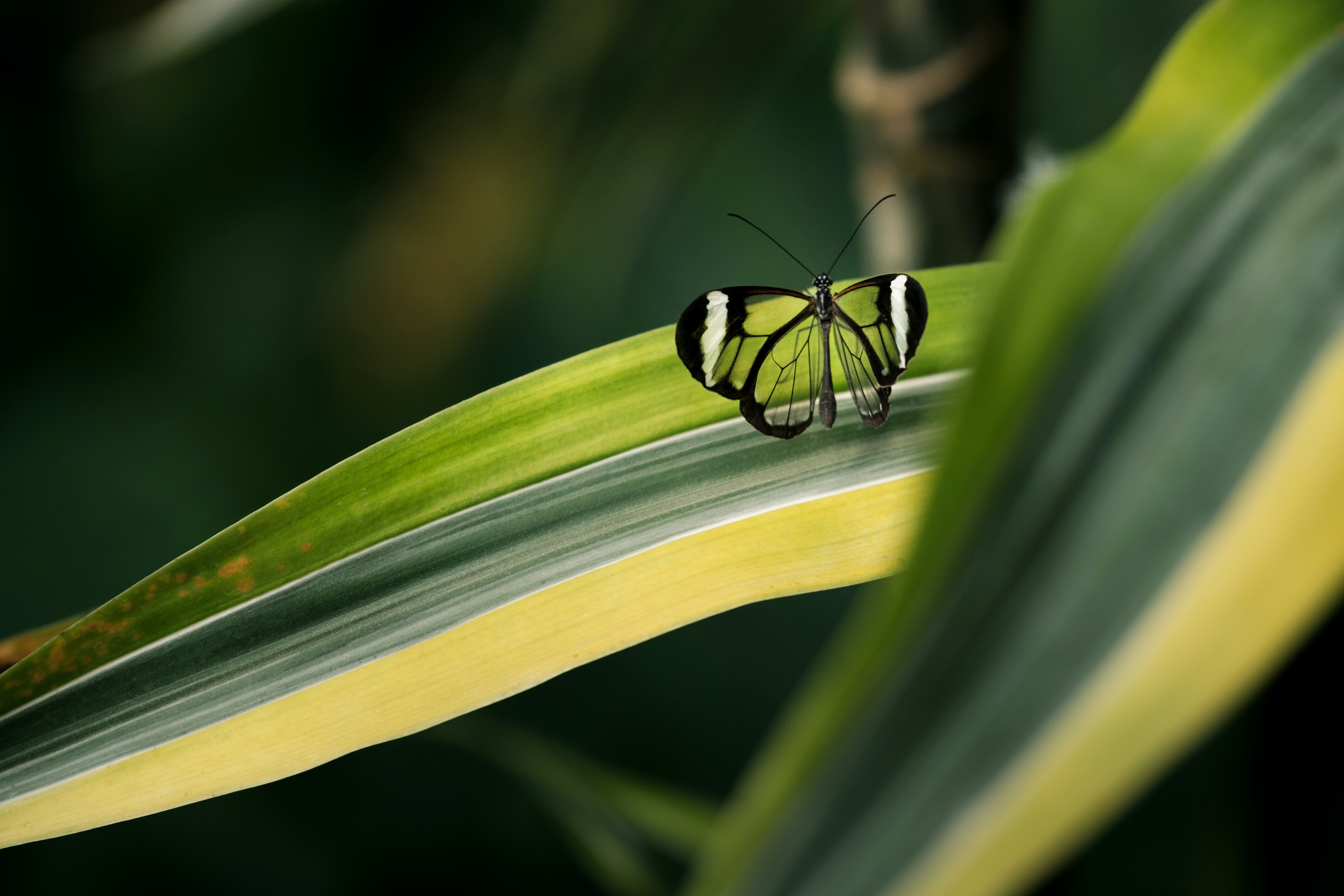 macro photography of green butterfly