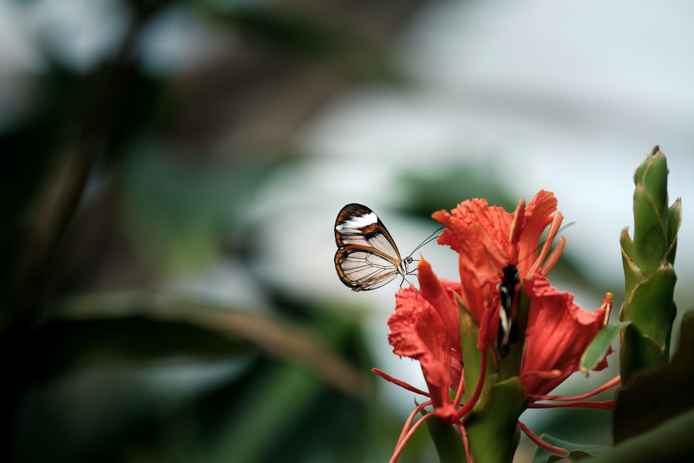 white and brown butterfly on red flower