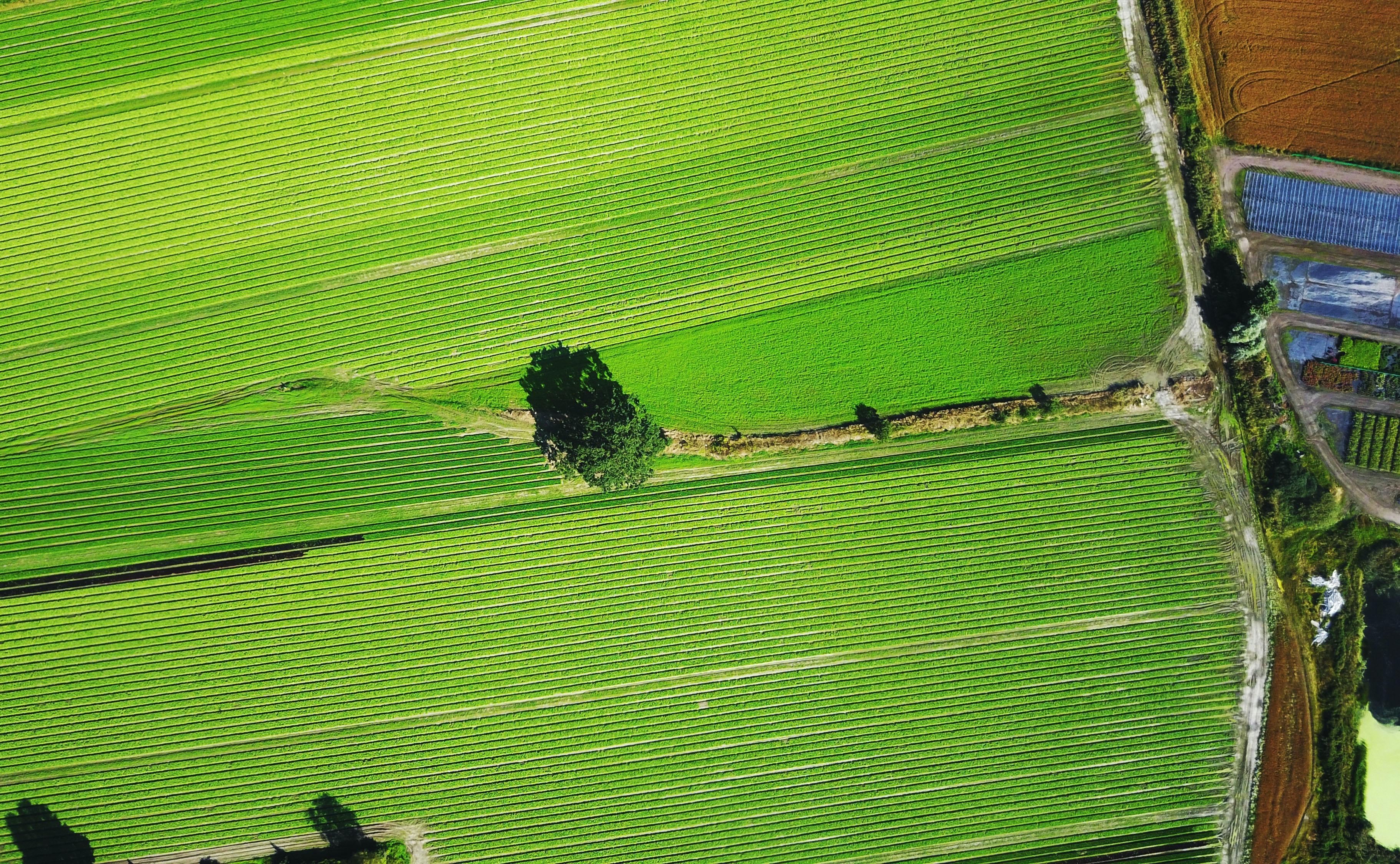 bird eye view of grass field