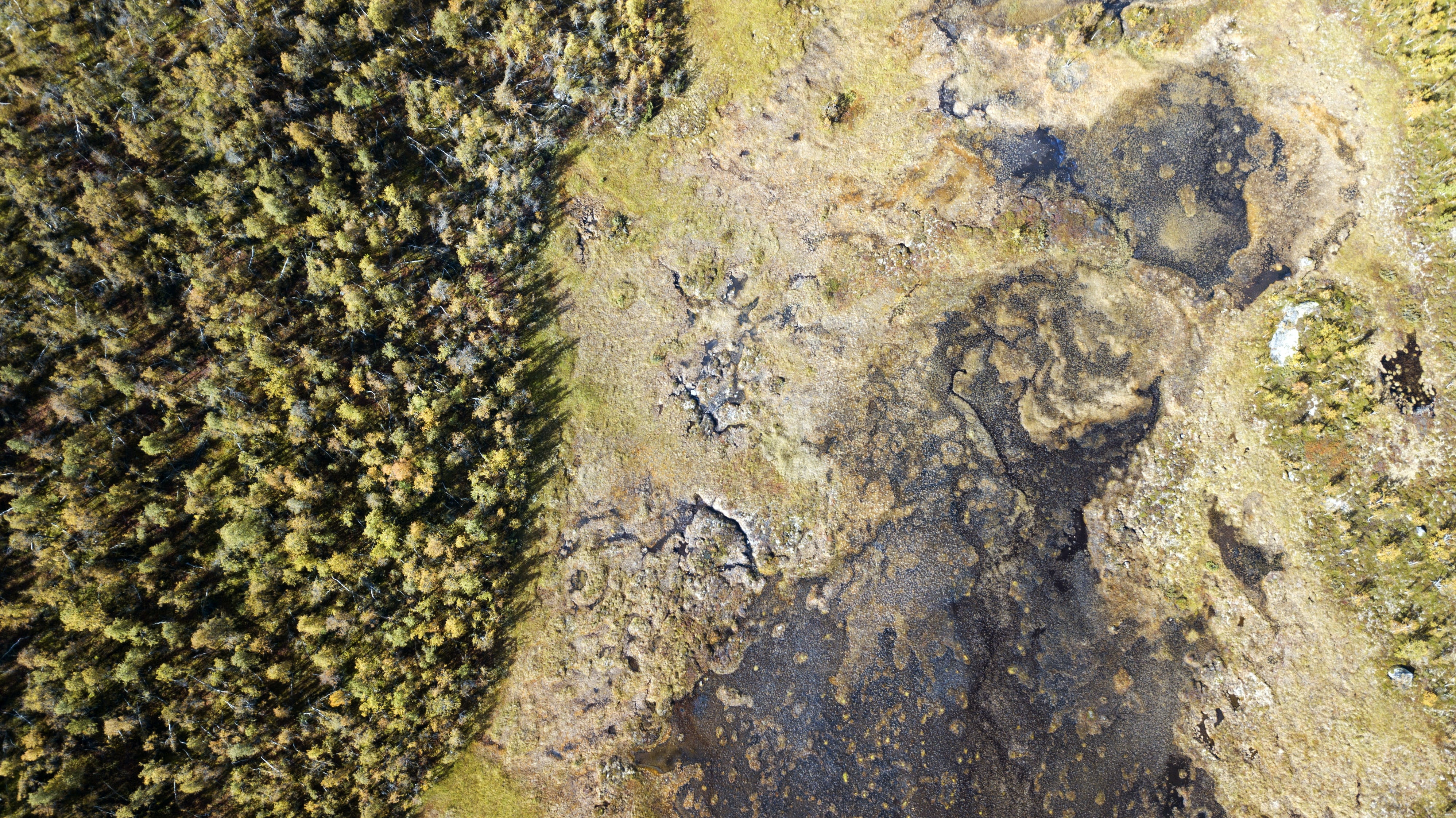 forest in aerial photography