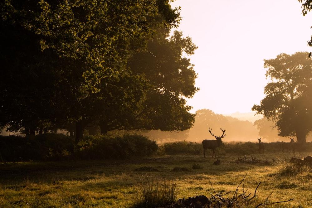 deer near tree at daytime