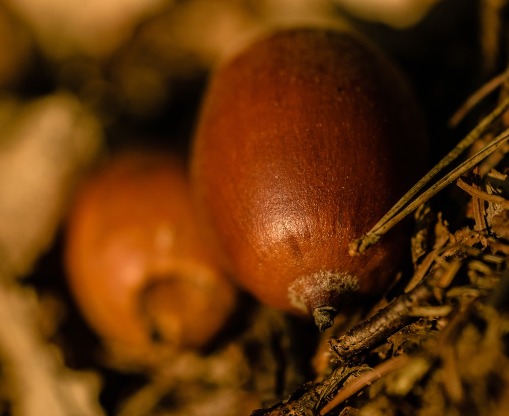 focus photography of nut