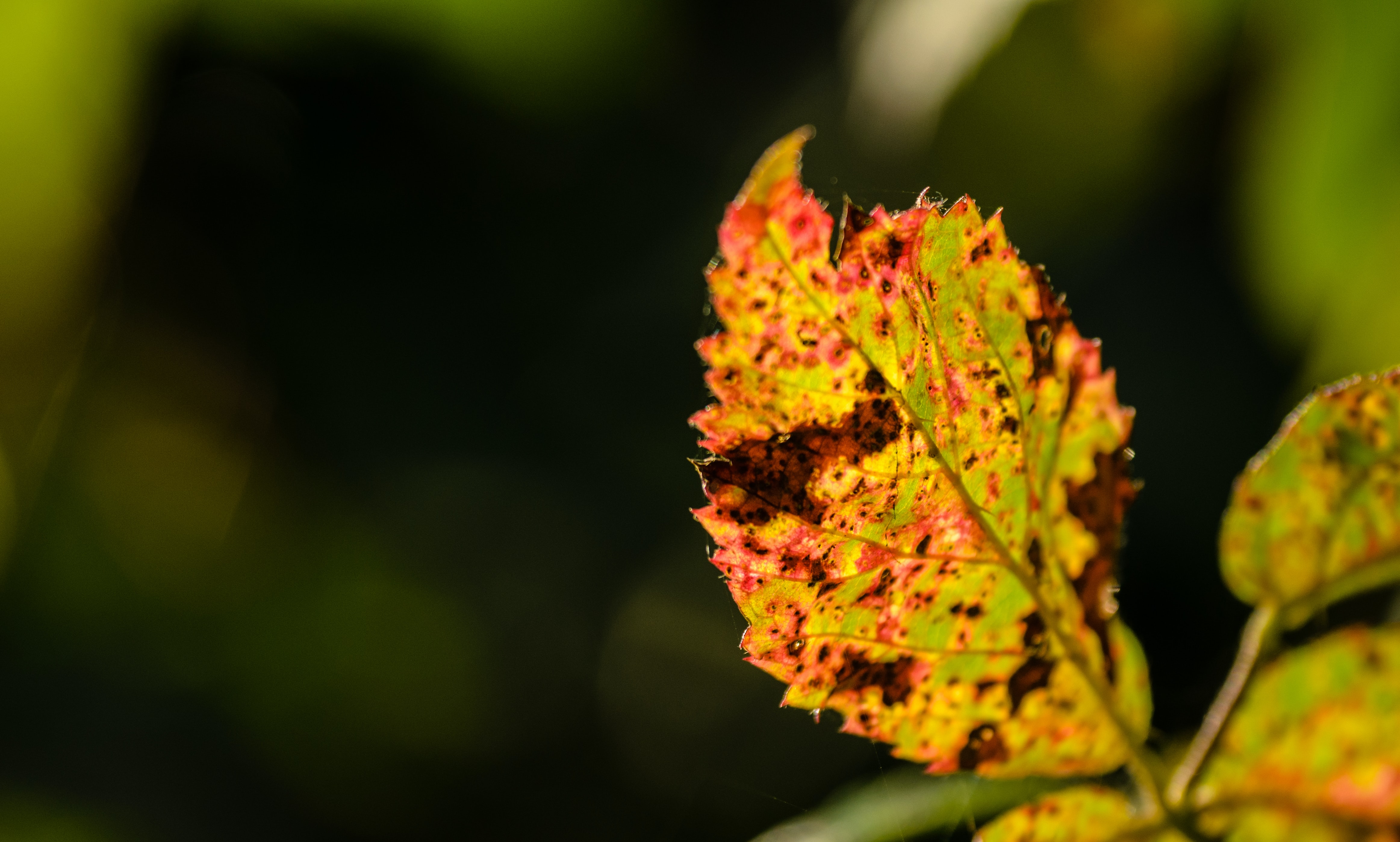 close view of ovate leaf