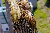 macro photo bees on bee hive
